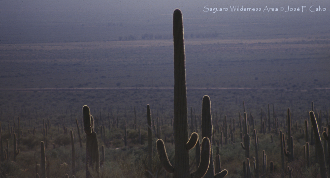 Saguaro Wilderness Area © José F. Calvo