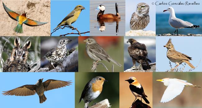 Catálogo de las aves de la Región de Murcia