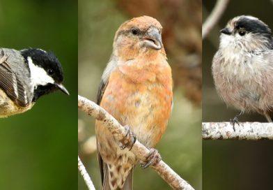 Modelos jerárquicos de riqueza de aves