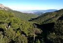 Murciélagos y rapaces forestales de Sierra Espuña