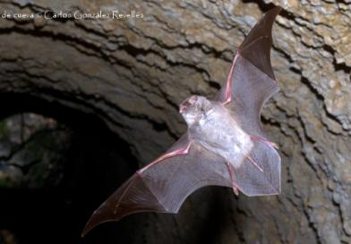 Ecología y conservación de murciélagos en paisajes áridos