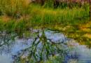 Biodiversidad en cuerpos de agua artificiales