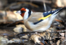 Comparación de la detectabilidad de aves entre métodos de muestreo