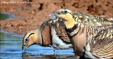 Riqueza de aves en pequeños cuerpos de agua
